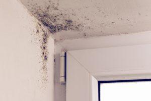 housing association disrepair claim